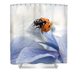 Ladybug Shower Curtain by Nailia Schwarz