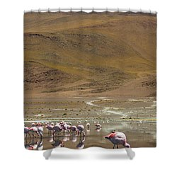 Shower Curtain featuring the photograph Laguna Colorada, Andes, Bolivia by Gabor Pozsgai