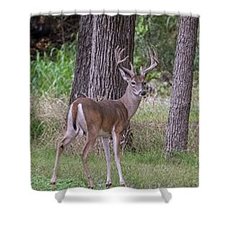 Large Buck Shower Curtain