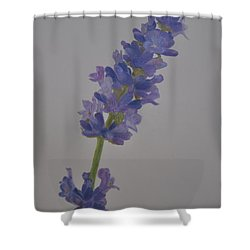 Lavender Shower Curtain by Linda Ferreira