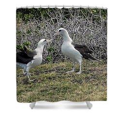 Laysan Albatross Hawaii #2 Shower Curtain