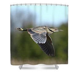 Le Butor Shower Curtain by Denis Dumoulin
