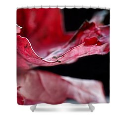 Leaf Study V Shower Curtain