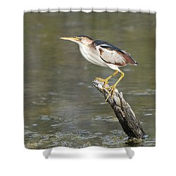 Least Bittern Shower Curtain