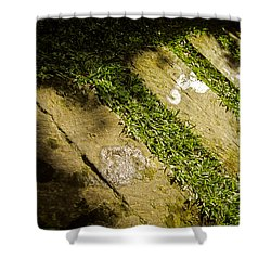 Shower Curtain featuring the photograph Light Footsteps In The Garden by T Brian Jones