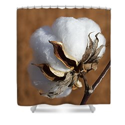 Limestone County Cotton Boll Shower Curtain