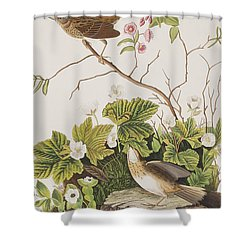 Lincoln Finch Shower Curtain by John James Audubon