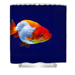 Lion Head Goldfish 4 Shower Curtain