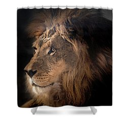Lion King Of The Jungle Shower Curtain