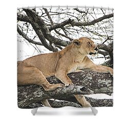 Lions In A Tree Shower Curtain by Pravine Chester
