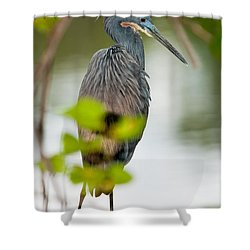 Shower Curtain featuring the photograph Little Blue Heron by Christopher Holmes