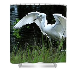 Little Blue Heron Hunting - Digitalart Shower Curtain