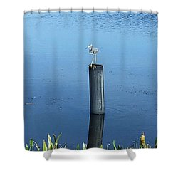 Shower Curtain featuring the photograph Little Blue Heron by Kay Gilley