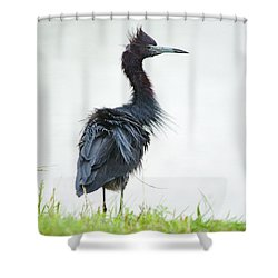 Little Blue Heron Portrait Shower Curtain