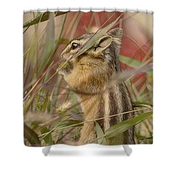 Little Chipmunk Shower Curtain