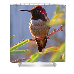 Little Jewel With Wings Sixth Version Shower Curtain
