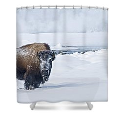 Shower Curtain featuring the photograph Lone Bison by Gary Lengyel