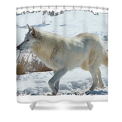 Lone White Wolf Shower Curtain
