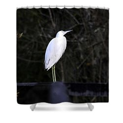 Looking Shower Curtain by David Lee Thompson