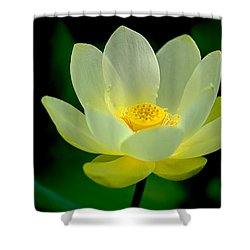 Lotus Blossom Shower Curtain