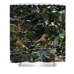 Love Those Berries Shower Curtain