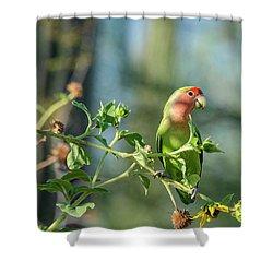 Lovely Little Lovebird  Shower Curtain