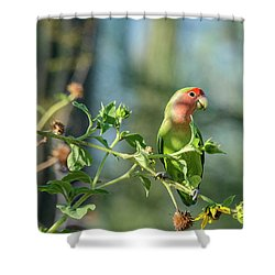 Lovely Little Lovebird  Shower Curtain by Saija Lehtonen