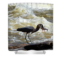 Lunch In The James River 14 Shower Curtain