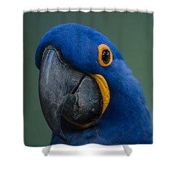 Macaw Shower Curtain by Daniel Precht