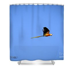 Macaw In Flight Shower Curtain by Melissa Messick