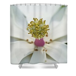 Magnolia Bloom Shower Curtain by Rich Franco
