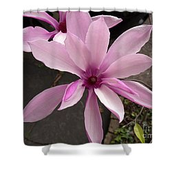 Magnolia Shower Curtain by Louise Heusinkveld