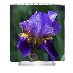 Majesty Shower Curtain by Doug Norkum