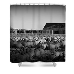 Make Way For Pumpkins Shower Curtain by Barbara Bardzik