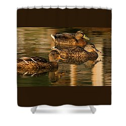 Mallards Swimming In The Water At Magic Hour Shower Curtain