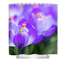 Shower Curtain featuring the photograph Marching Into Spring by Rebecca Cozart