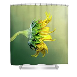 Maria's Sunflower Shower Curtain by Mary Timman