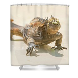 Marine Iguana On Galapagos Islands Shower Curtain