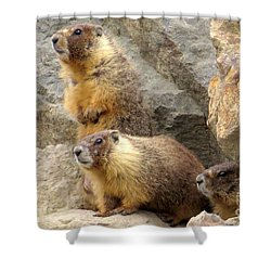 Marmot Trio Shower Curtain