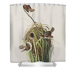 Marsh Wren  Shower Curtain