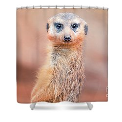 Meerkat Shower Curtain by Stephanie Hayes