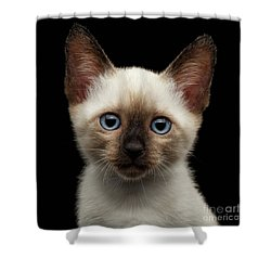 Mekong Bobtail Kitty With Blue Eyes On Isolated Black Background Shower Curtain by Sergey Taran