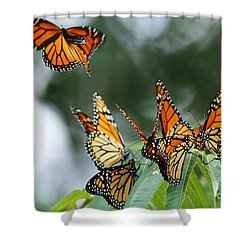 Migration Of Monarchs Shower Curtain