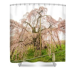 Shower Curtain featuring the photograph Miharu Takizakura Weeping Cherry02 by Tatsuya Atarashi