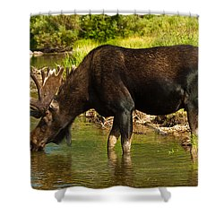 Moose Shower Curtain by Sebastian Musial