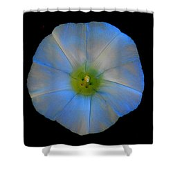Morning Glory Shower Curtain by Karen Molenaar Terrell