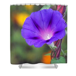 Shower Curtain featuring the photograph Morning Glory by Vadim Levin