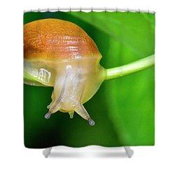 Morning Snail Shower Curtain