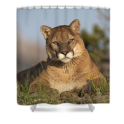 Shower Curtain featuring the photograph Mountain Lion Portrait North America by Tim Fitzharris