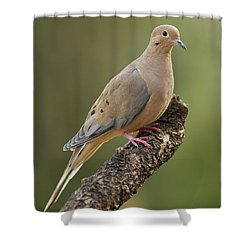 Mourning Dove Shower Curtain by Doug Herr